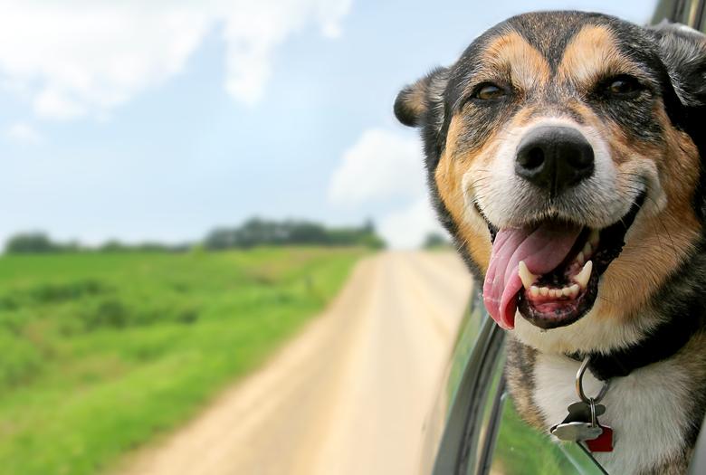 Weekend Ardennen met hond
