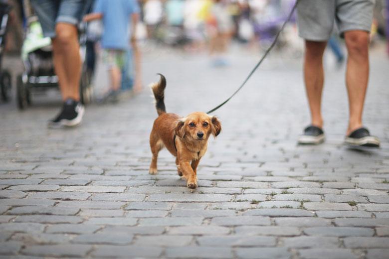 B&B honden toegelaten Brugge