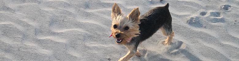Weekendje weg met hond aan zee in België