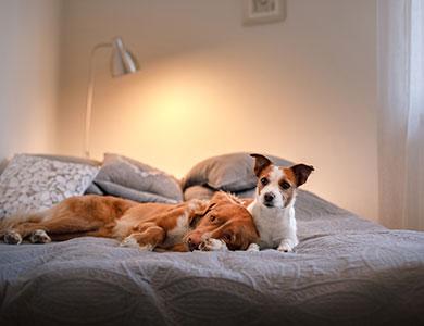 Hondvriendelijke hotels Belgische kust