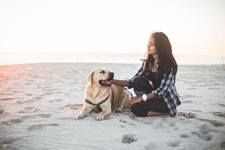 Belgische kust honden toegelaten