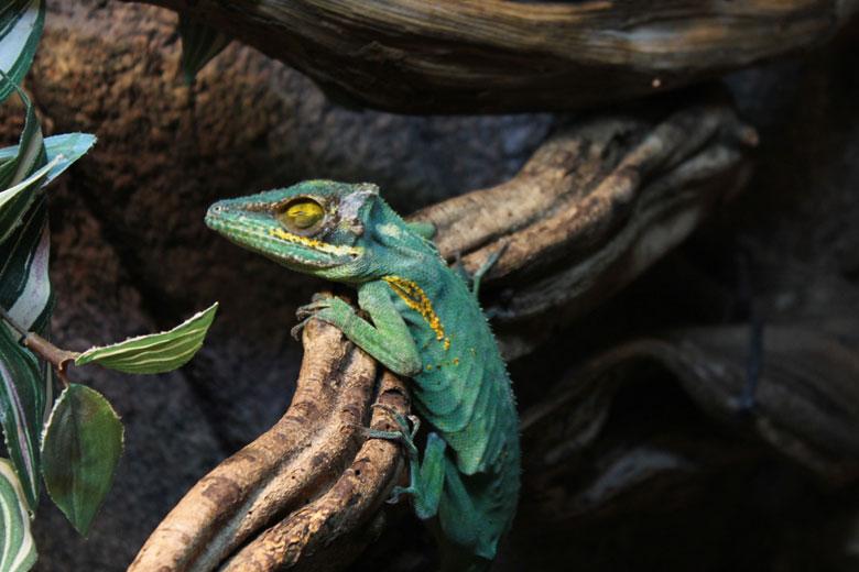 Serpentarium Blankenberge
