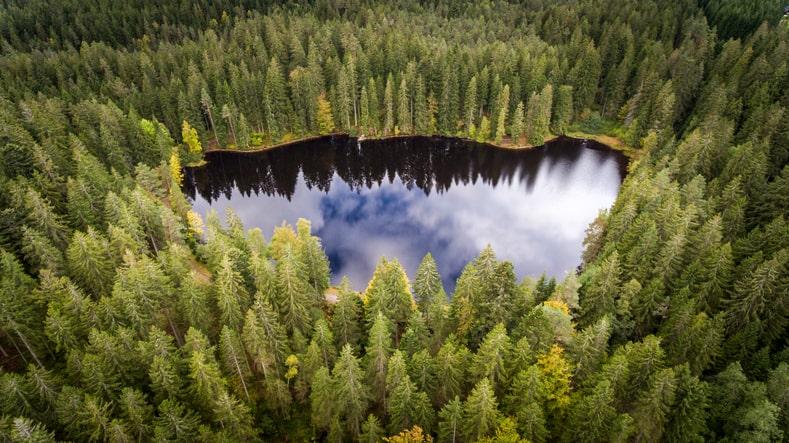 het zwarte woud